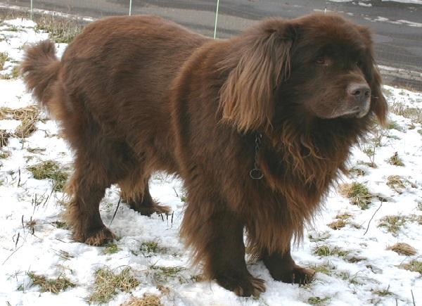 Köpeklerle ilgili ilginç bilgiler