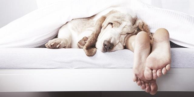 Köpeklerle ilgili ilginç bilgiler15