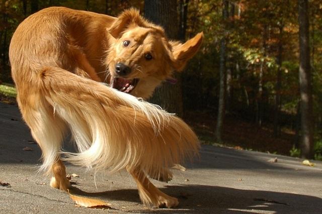 Köpeklerle ilgili ilginç bilgiler5