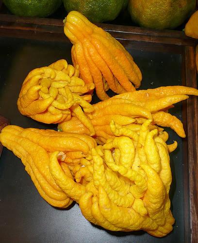 Buddha'nın eli