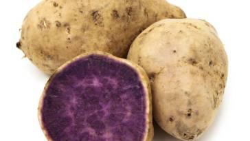 mor tatlı patates