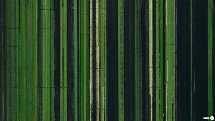 Florida-Tarım Arazisi