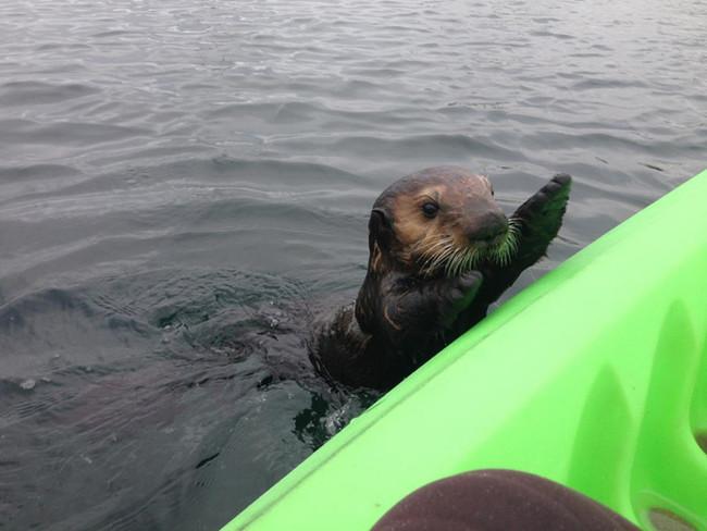 merhaba diyen deniz hayvanı