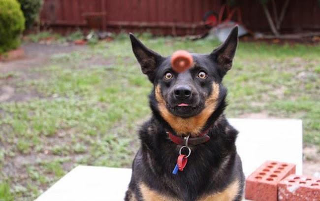 İlginç köpek resimleri 9
