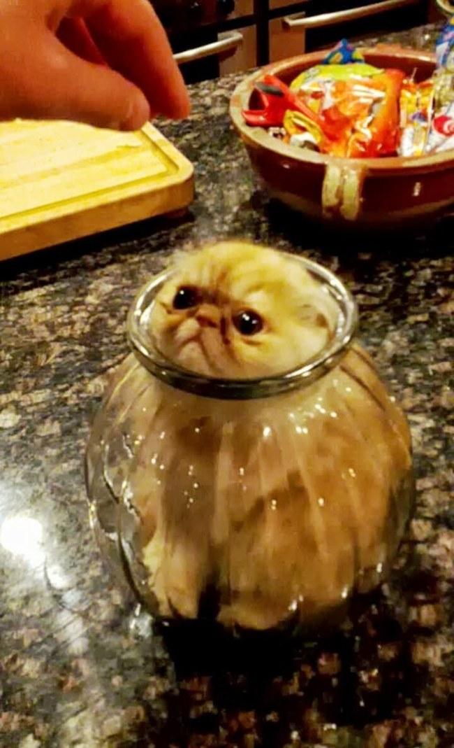 şişede kedi
