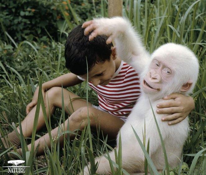 albino maymun