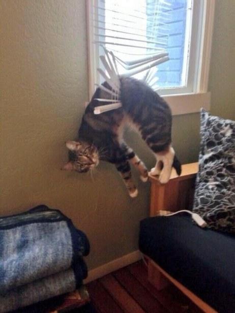 askıda kedi
