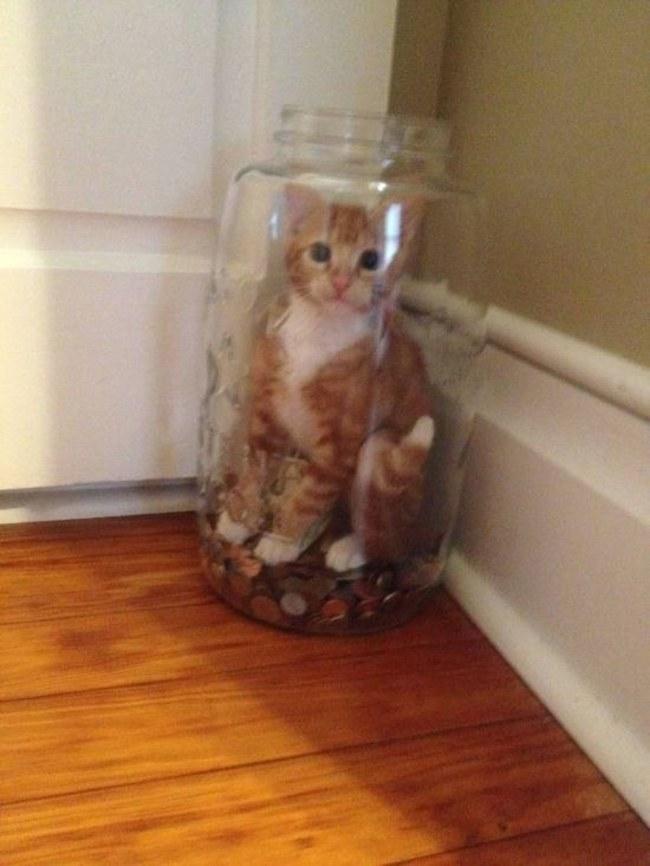 kavanozda kedi