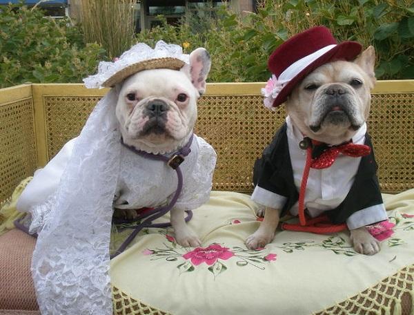 evli-köpekler