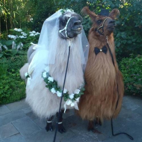 evli-lamalar