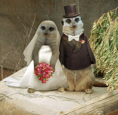 evli-mirketler