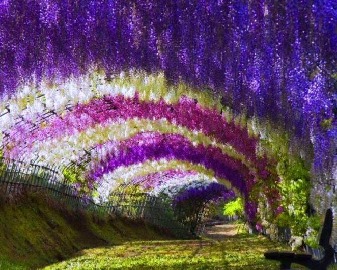 japonya çiçek bahçesi