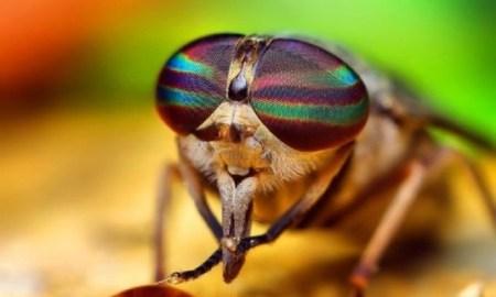sineklerin el temizlemesi