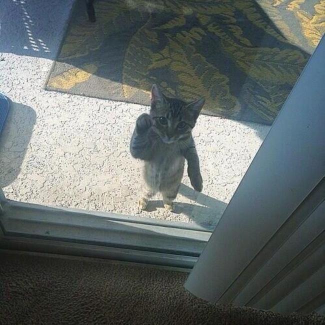Lütfen beni içeri al diyen kediler 2