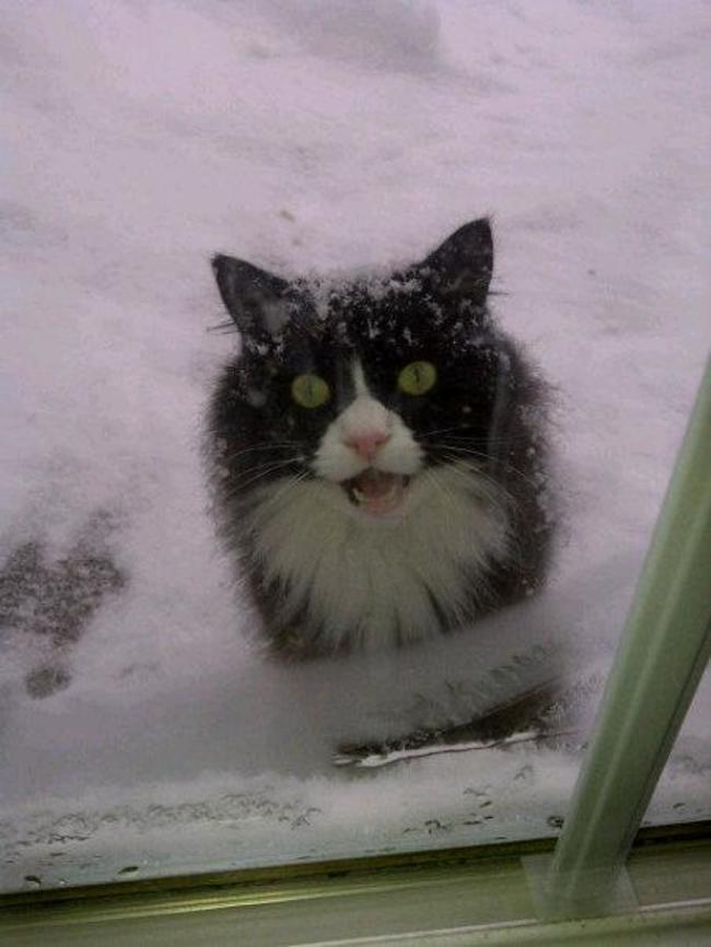 Lütfen beni içeri al diyen kediler 6