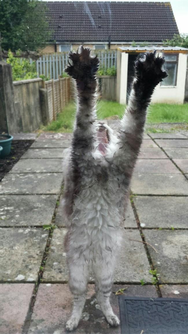 Lütfen beni içeri al diyen kediler 9