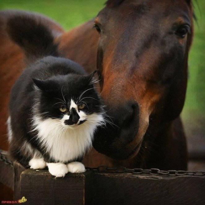 at ve kedi
