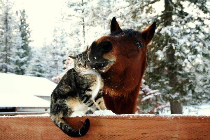 kedi ve at dostluk