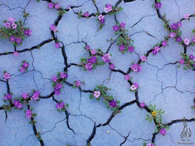 duvar arasında çiçek