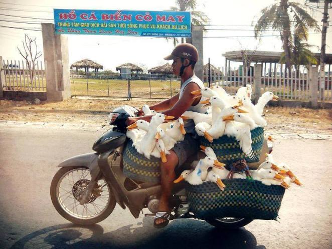 kaz motosiklet