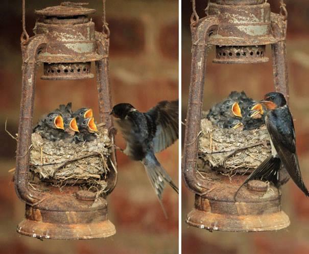 kuş-yuvası