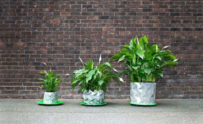 bitkilerle büyüyen saksılar