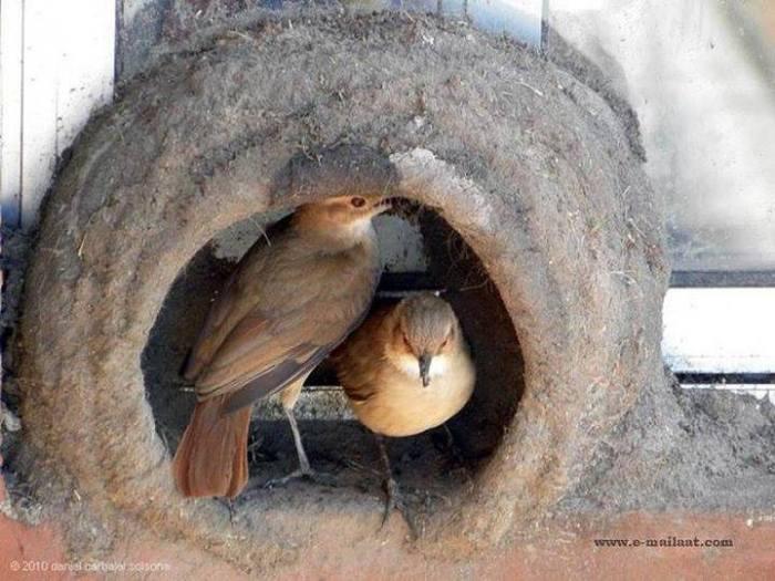 Kuşların yuva yapımı 14