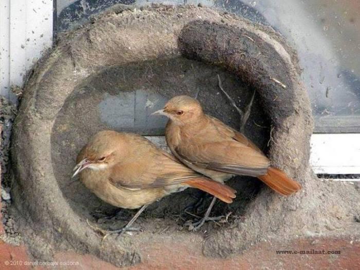 Kuşların yuva yapımı 9