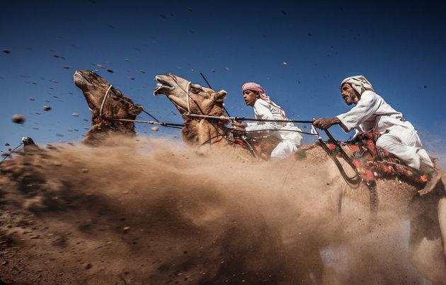 deve yarışları
