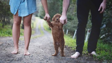 köpeği evlat edinen çift
