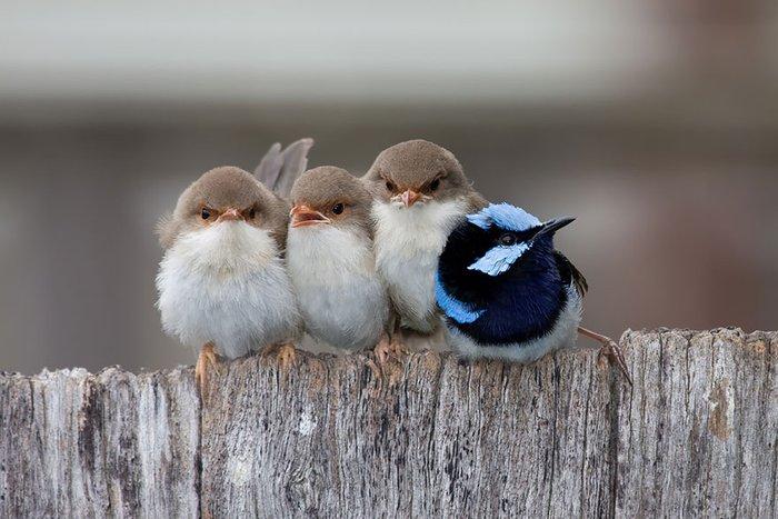 beraber kuşlar