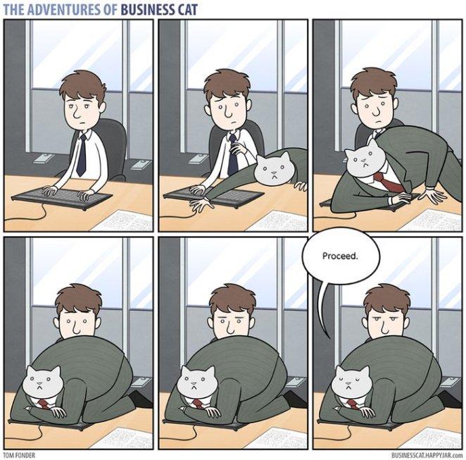 iş yaptırmayan kedi