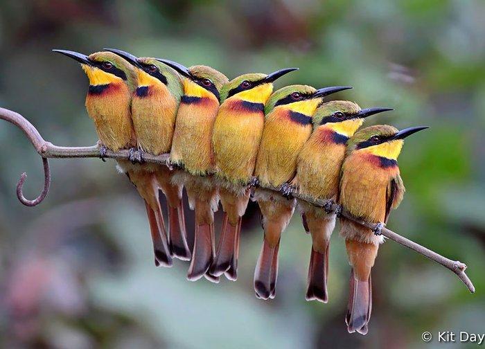 kuş foptoğrafları