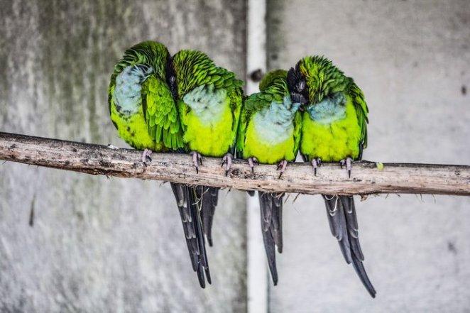kuşlar dizilmiş