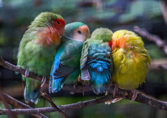 yanyana duran kuş