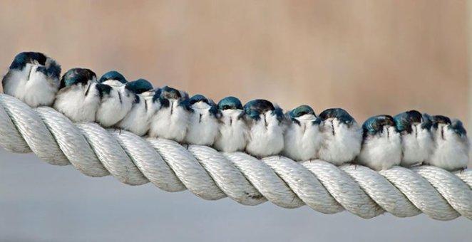 yanyana durmuş kuşlar