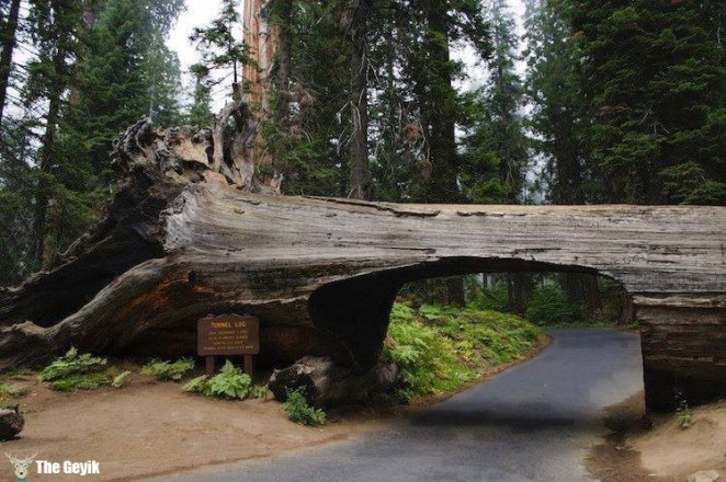 ağaç yol doğa