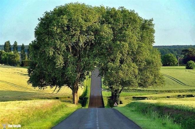 ağaç yol