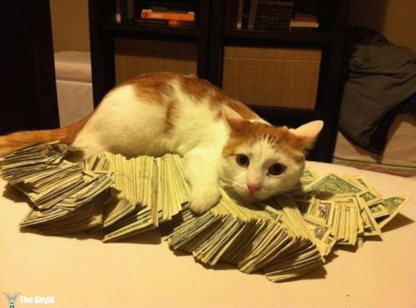 para kedi