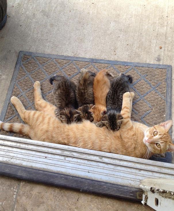 aile kedi bilgi