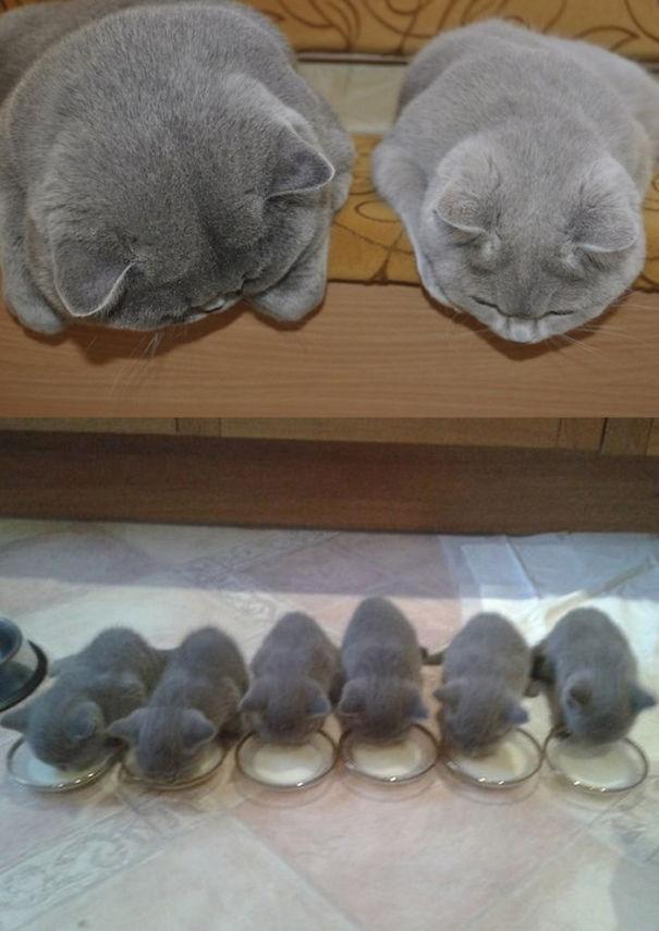 anne kediler