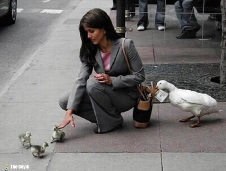 hırsız ördek