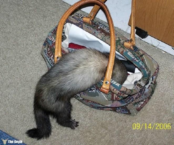 hırsız hayvan