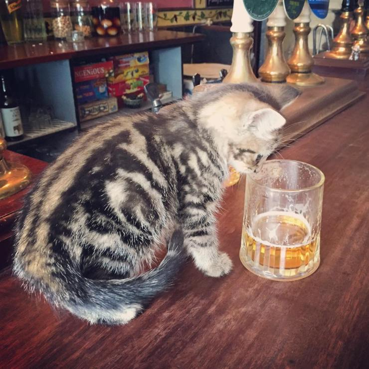 ingiltere kedi barı