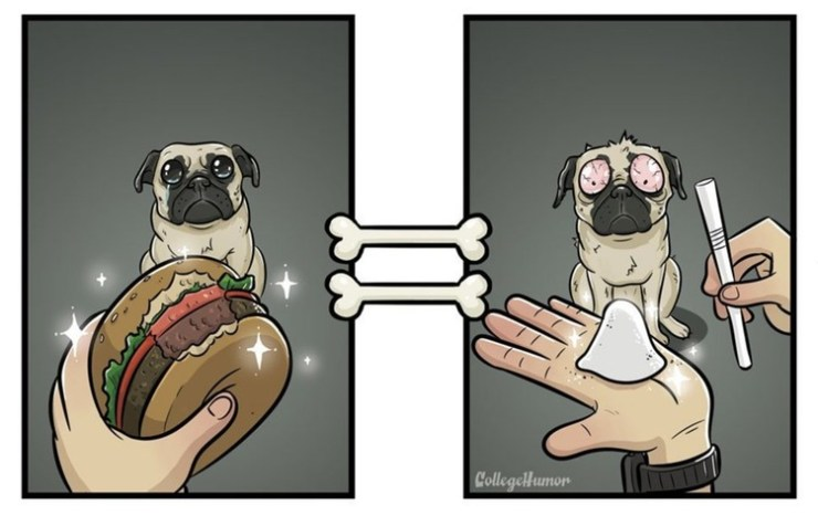 köpek hamburger