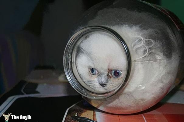 kedi şişede komik