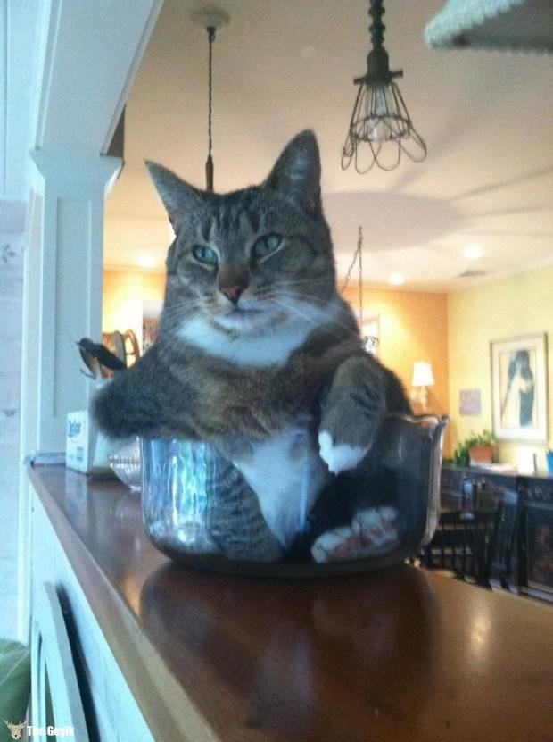 kedi sıvı