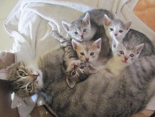 kediler aile 4