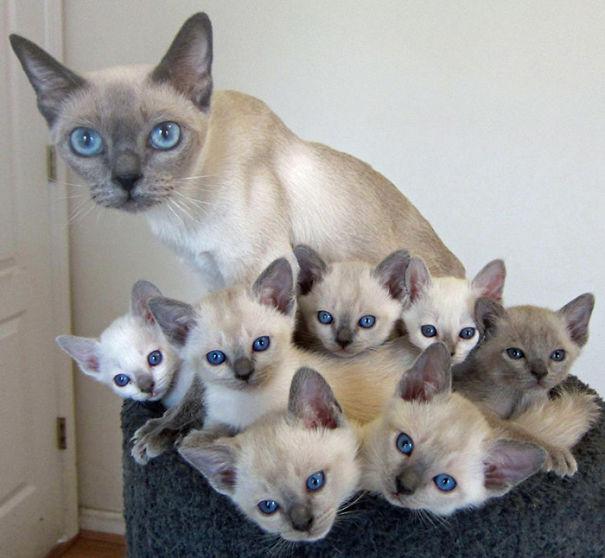 kediler aile 7