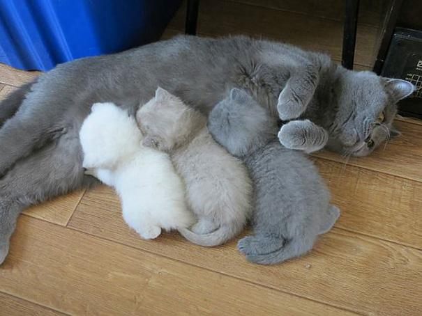 kediler aile